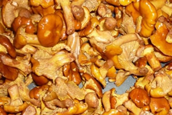 Салат грибной с курицей и луком